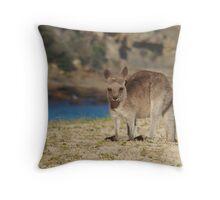 Pebbly Beach Kangaroo - Macropus giganteus Throw Pillow