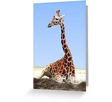RESTING GIRAFFE Greeting Card