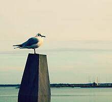 Perched Over Fanø Bugt by the-novice