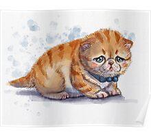 The Saddest Kitten Poster