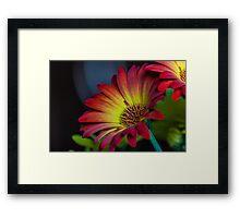 Red Yellow Flower Framed Print