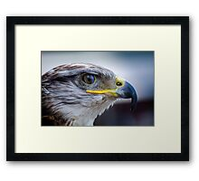 Falcon bird Framed Print
