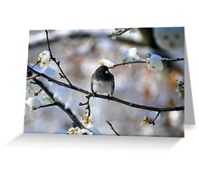 Northern Junco in a Blossoming Pear Tree on a Snowy Day Greeting Card