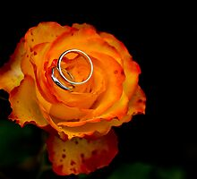 Wedding Rose by Bryn Jones
