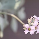 Sway by the-novice