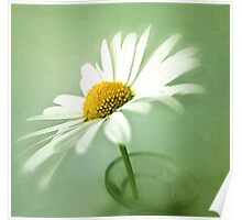 Daisy on green background Poster