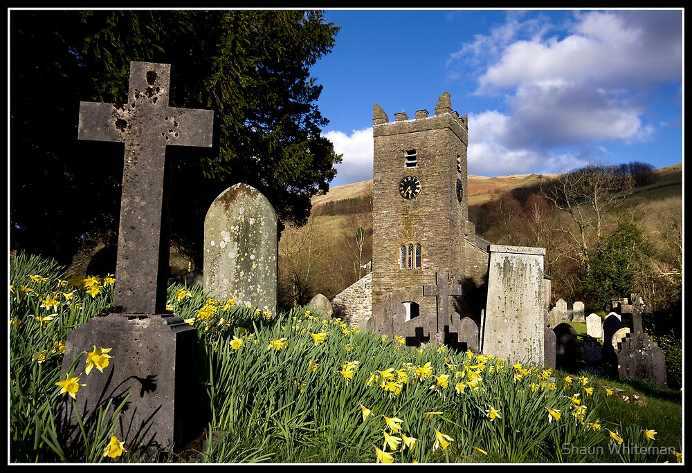 Daffodils at Troutbeck Church by Shaun Whiteman