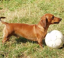 A Dachshund with a ball by anibubble