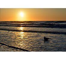 Seagull at Sunrise Photographic Print