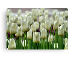 Tulips in Toronto in April Canvas Print