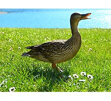 Duck by water Photographic Print