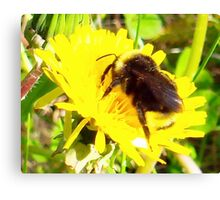 I Found a Baby Bumble Bee Canvas Print