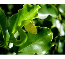 Yellow butterfly Photographic Print