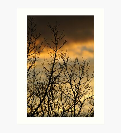 Dusk through bare branches Art Print