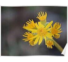 Yellow & Wild Poster