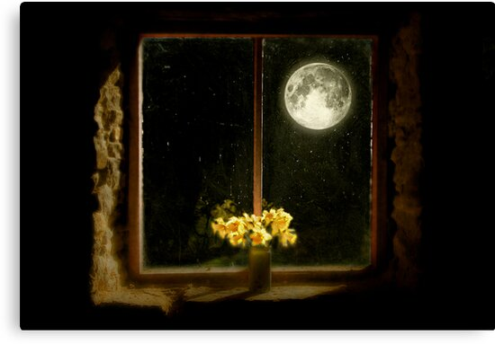 Moonlight and Daffodils by Angela Harburn