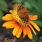Bask by Alice Kahn