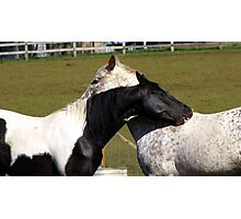 Common Horse Sense <>You Scratch My Back I'll Scratch Yours  Photographic Print