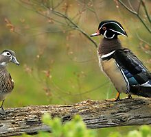 I Do NOT Walk Like a Duck! by Ken Haley