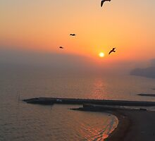 Beautiful Sunset And Sea Gulls by rumisw
