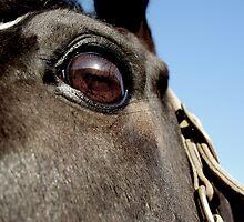 attentive eyes by Lisa Skala