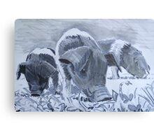 Saddleback Piglets  Canvas Print