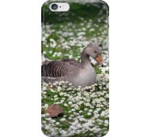 single duck among daisies iPhone Case/Skin