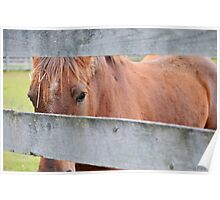 A Horse at the Fence Poster