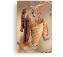 Dried Leaf Metal Print