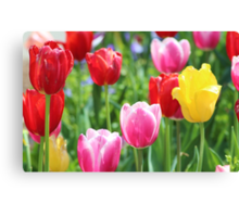 Pick A Color Canvas Print