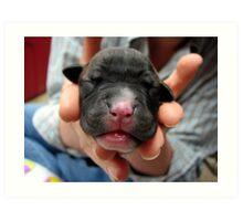 Precious pup Art Print