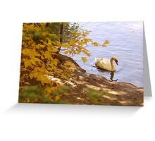 Peaceful Swan Greeting Card