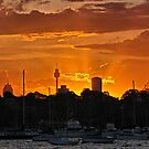 Evening at Rose Bay marina II by andreisky