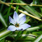 Violet flower by lilleesa78