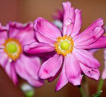 Japanese Windflowers by Kathryn McCarthy