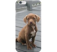 An American Pit Bull Terrier iPhone Case/Skin