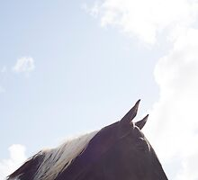single horse in a field with bright blue skies by morrbyte