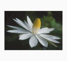 Night Bloomer ~ White Water Lily with Splayed Petals   Kids Clothes