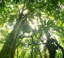 Jungle Dreaming... by Jarrod Lees