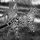 Chasing Mum by miroslava