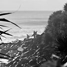 Burleigh by andrewt