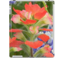 Indian Paintbrush Up Close iPad Case/Skin