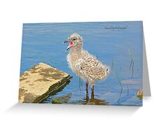 Chick Looking for Mum (Baby Seagull) Greeting Card