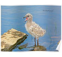 Chick Looking for Mum (Baby Seagull) Poster