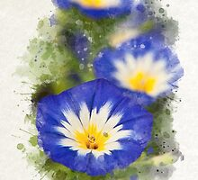 Morning Glory Watercolor Art by Christina Rollo