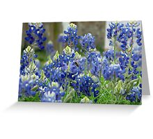 A Bee's Blue Bonnet Heaven Greeting Card