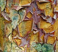 Paper Bark Abstract 2 by Jessica Jenney
