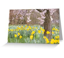 Cherry orchard and daffodils Greeting Card
