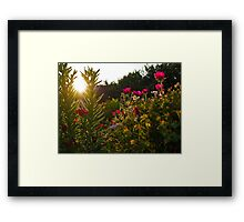 Sunset Through Flowers Framed Print