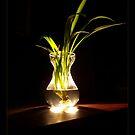 Light Plant by seawhisper